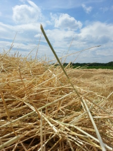 Straw Field (Photo by Susanne Schuberth)