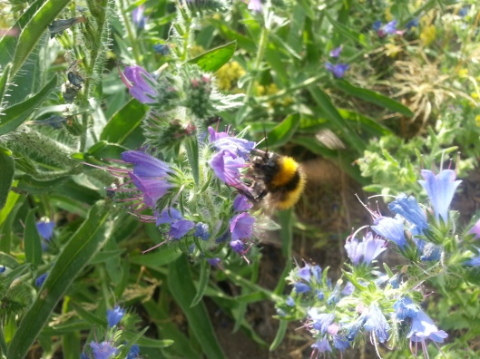 Bumblebee on the Move (Photo by Susanne Schuberth)